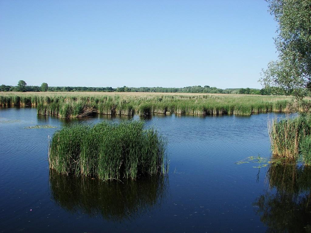 Holt-Duna ág, Lipót